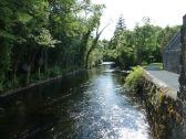 A trout stream