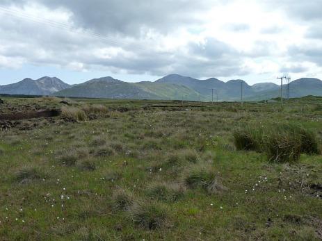 The bog really is interesting landscape