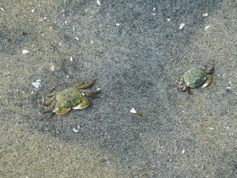 It's actually a crab beach