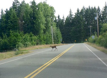 Watch out for deer on the road