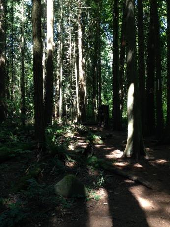 Give me a home among the sequoia treea
