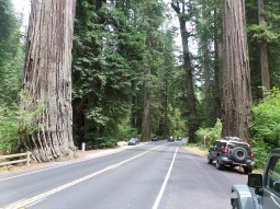 Now, back through more redwoods again