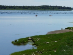 Wonda takes us to some lovely spots - people kayaking past mussel beds