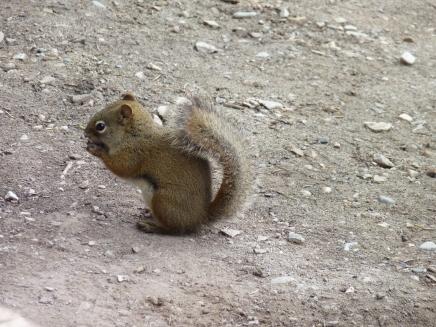 Spot a squirrel