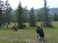 We all want an elk picture